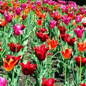 Spring on Mount Royal
