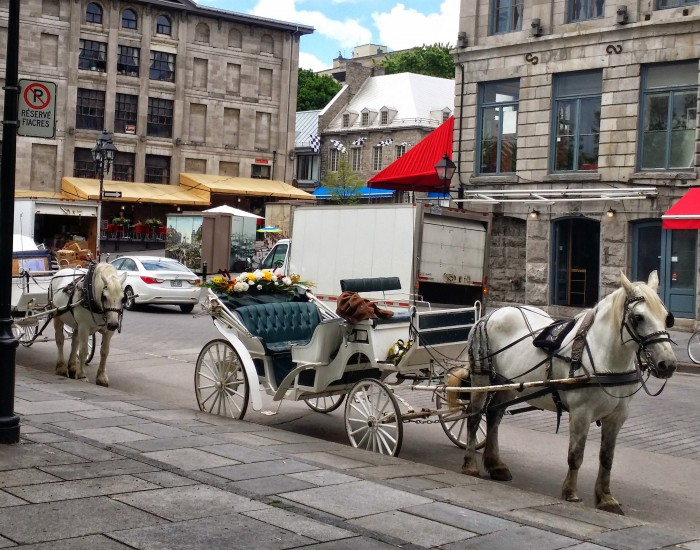 Old Montreal Caleche, St Jacques Square