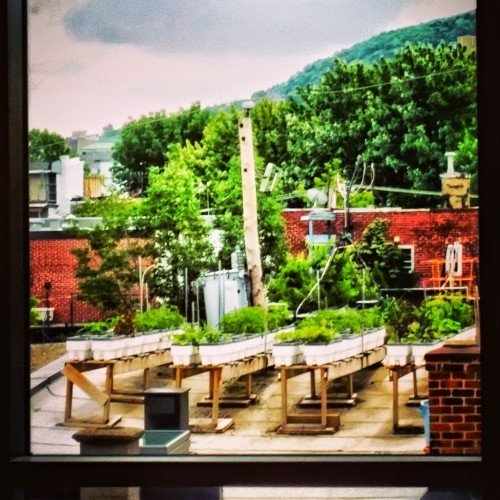 Le Plateau Rooftop Garden